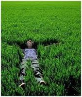 La hierba de cebada pertenece a la familia de las gramíneas llamadas hierbas de los cereales . Durante la primera parte del siglo 20 , el jugo de la hierba de cebada se descubrió que era rica en vitaminas y minerales.