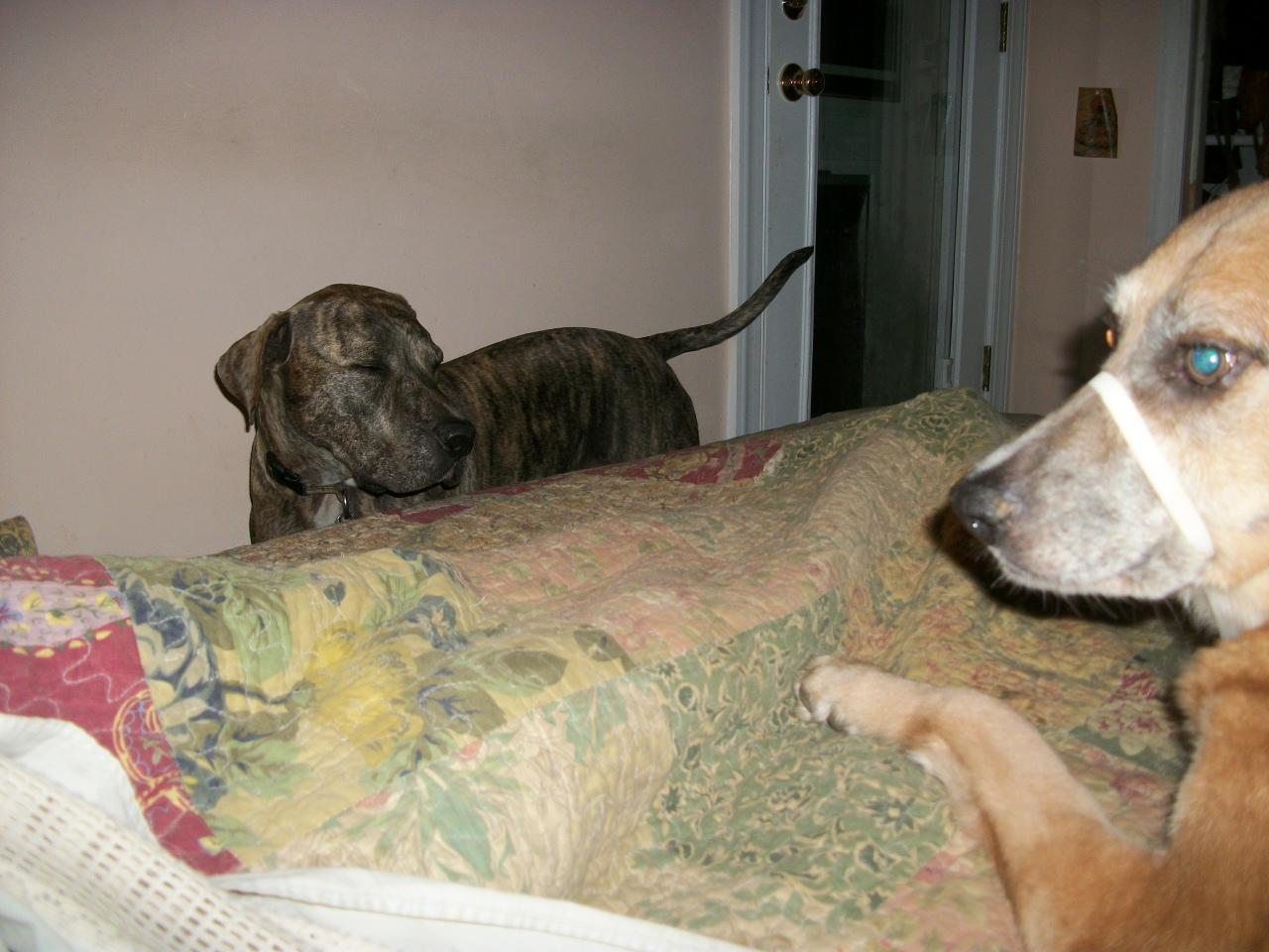Sarah Fisher Dog Training