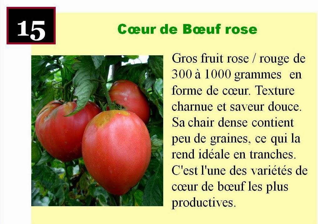Le jardin des sources les tomates - Planter des tomates coeur de boeuf ...
