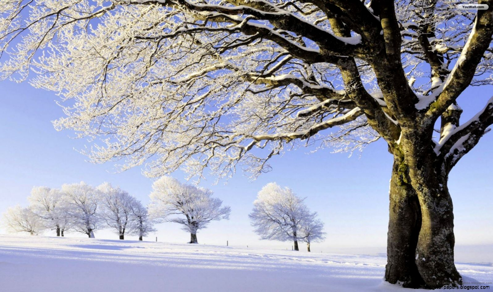 Winter Trees Wallpaper   WallpaperSafari