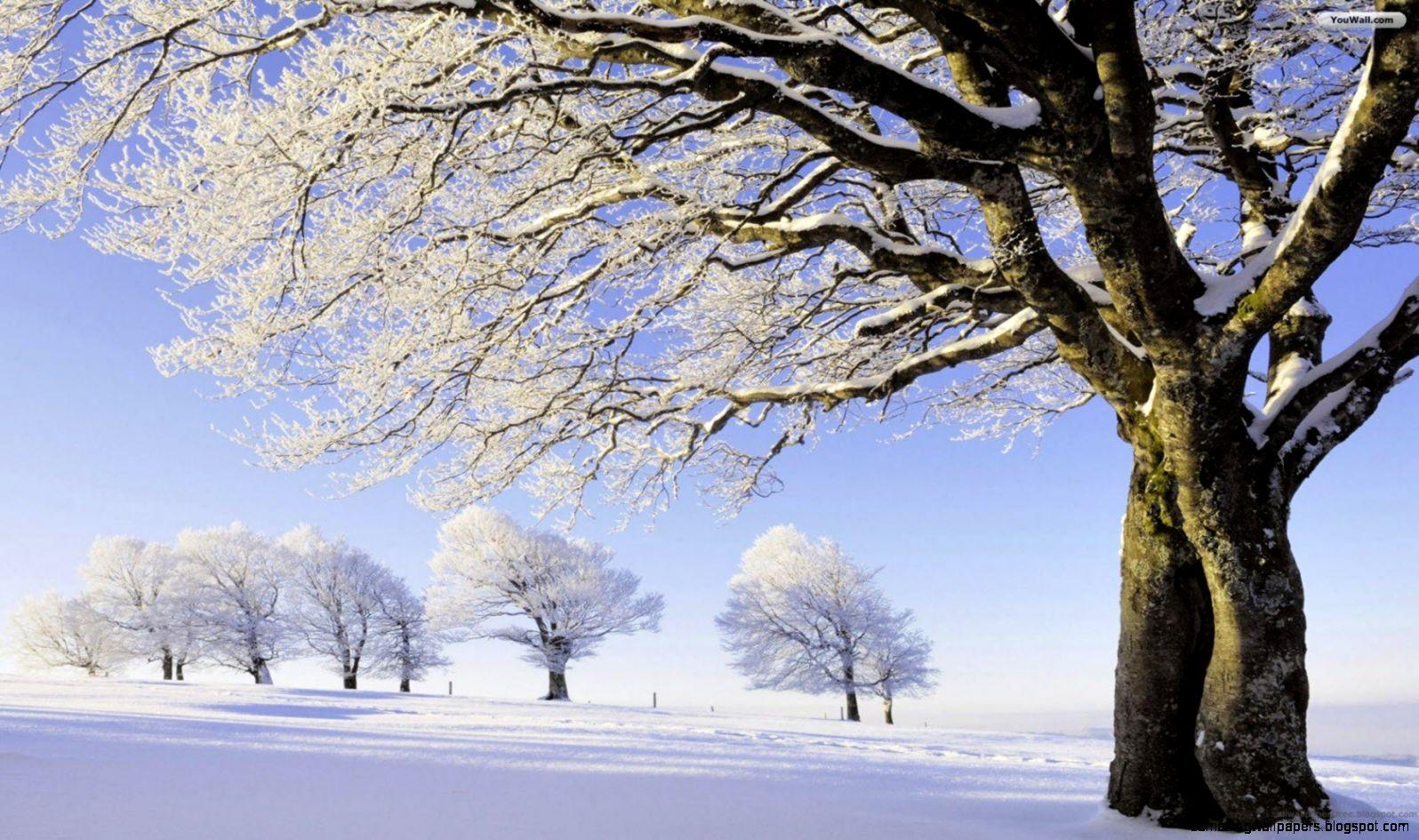 Winter Trees Wallpaper   WallpaperSafari