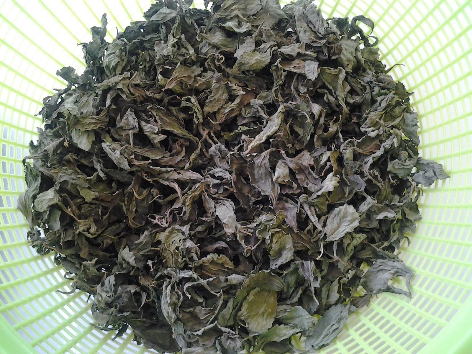 Klik Cara Proses Stevia