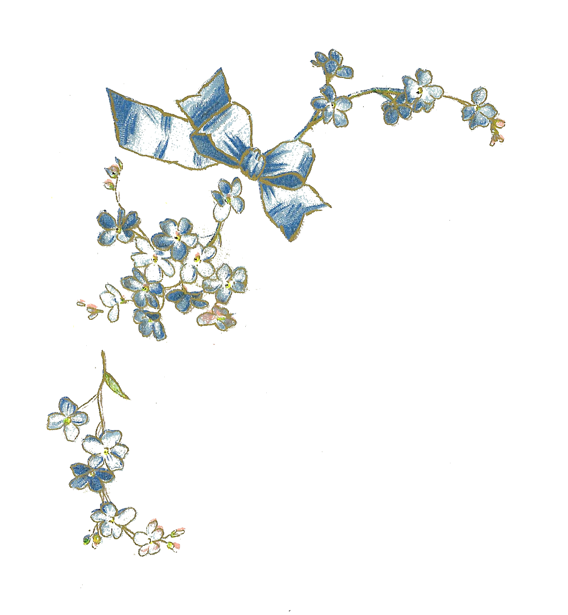 Free Flower Graphic: Vintage ForgetMeNot Flower Illustration with