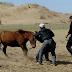 Gambar Tradisi Kejam Di Mongolia Belah Dan Makan Telor Kuda