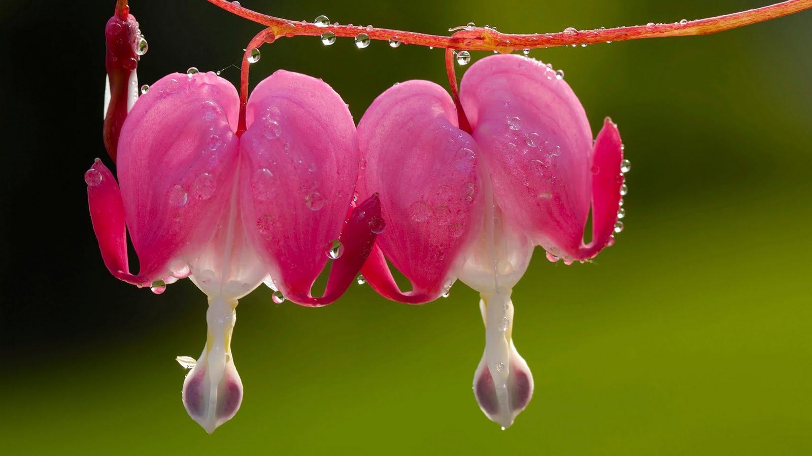 Imágenes de flores Botanical Online - Imagenes Flores De Jardin