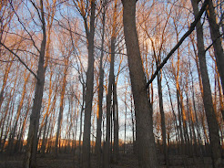 """Νότα Κυμοθόη""""Το δάσος"""" Φωτογραφία"""