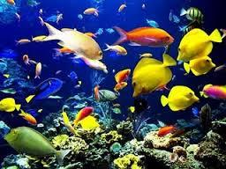 خلفيات سطح المكتب متحركة حوض سمك متحرك