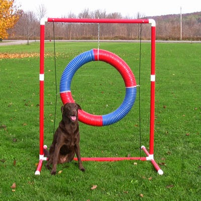 Grace and Buster: DIY Agility Equipment: Tire Jump
