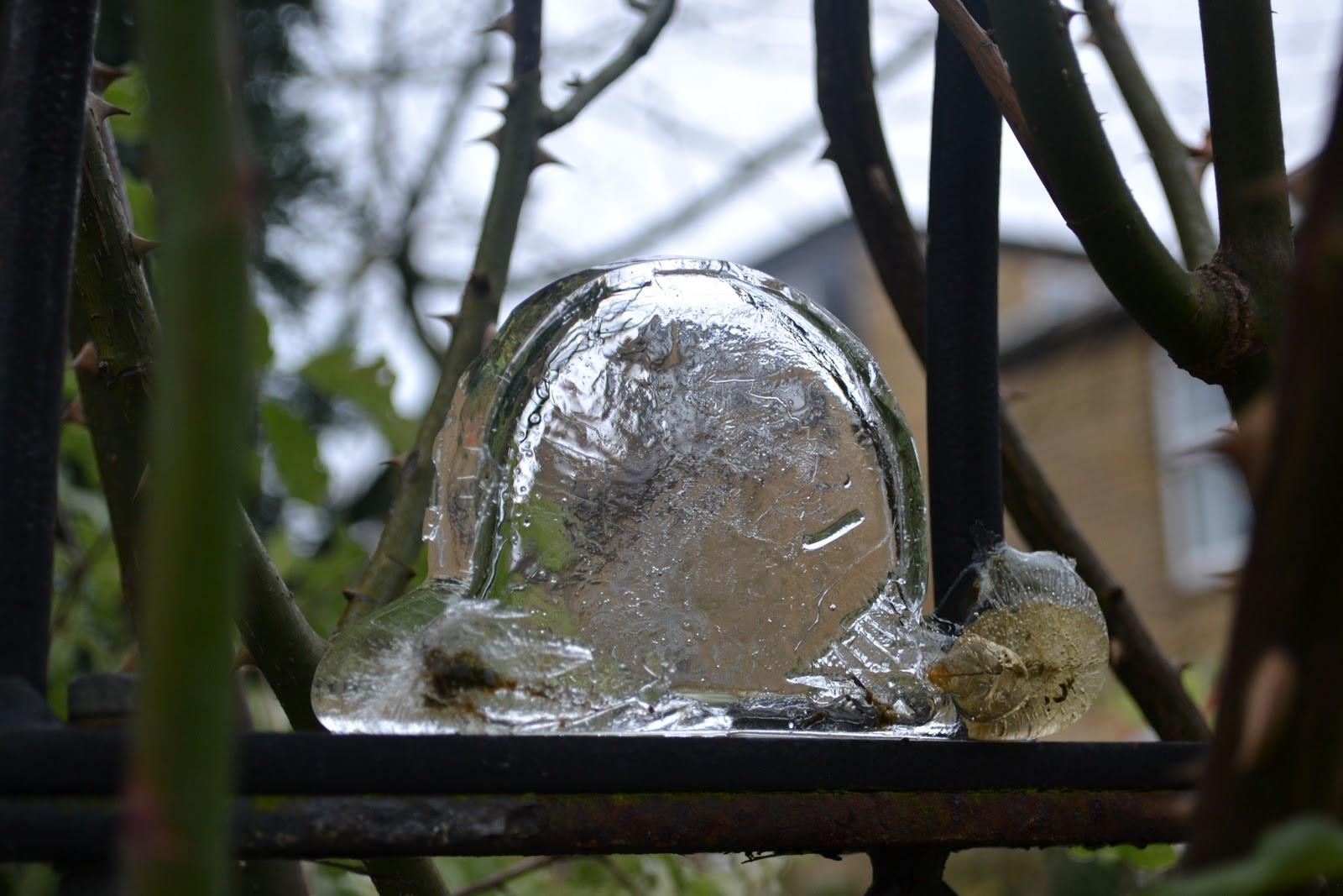 winter garden kidsinthegarden