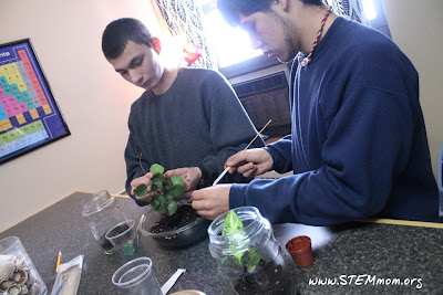 Building Terrariums with high school students: STEMmom.org