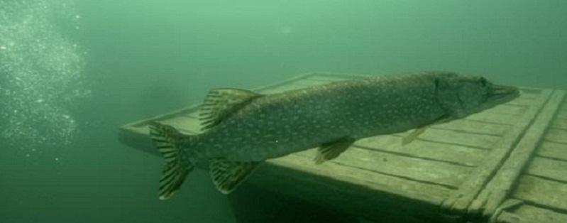 Fischereigemeinschaft Neufelder See