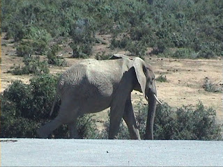 an elephant in Addo Elephant National Park South Africa