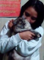Kucing sehat, hewan kucing, Kucing Hias, Kucing persia, binatang jinak, peliharaan kucing,