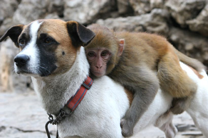 funny animals monkey and dogs