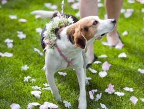 Responsible Pet Ownership Blog: Tips for Involving Your Dog in Your Wedding