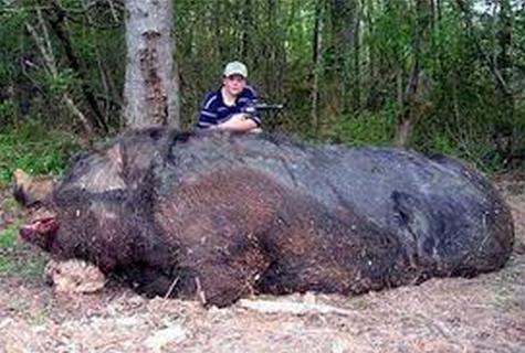 Monster Babi Raksasa Menggemparkan Dunia Ditembak Seorang Anak Kecil