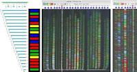 Geles de secuenciación del ADN