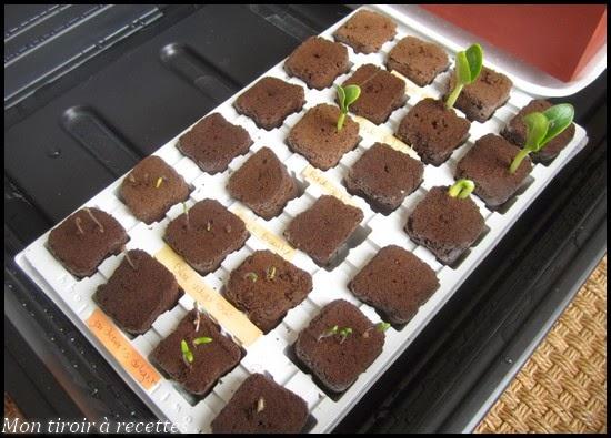 semis mini serre chauffante