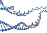 Pengertian DNA, Struktur, Replikasi, Fungsi, Isolasi, & Tes DNA