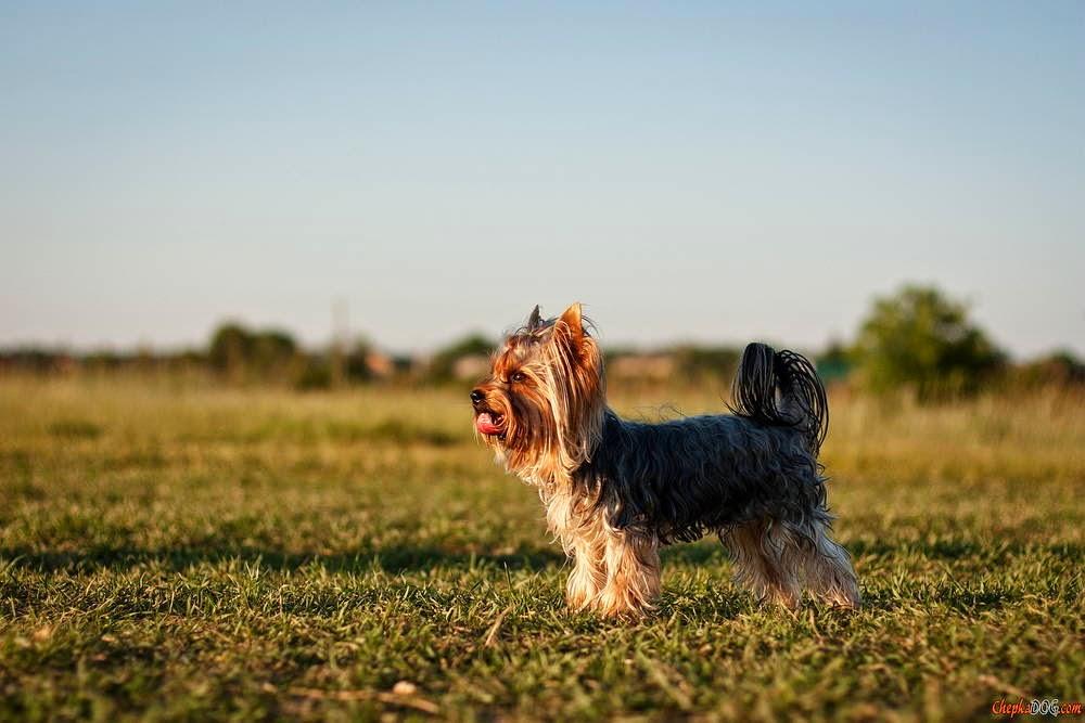 fotos razas de perros
