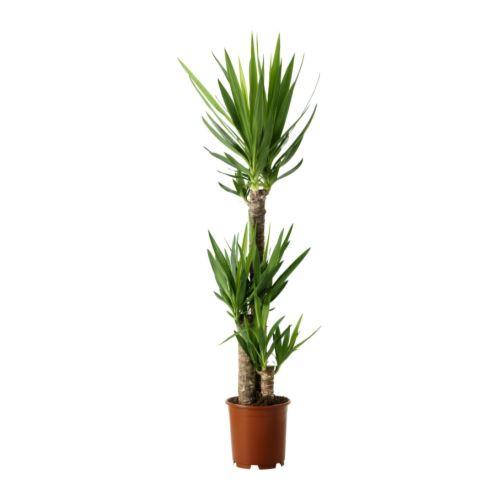 stora växter ikea