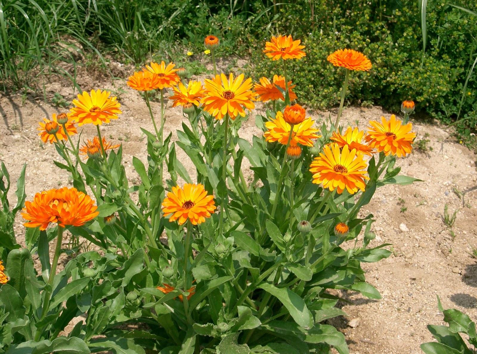 Enjoy life antiparassitari naturali fai da te per l 39 orto for Trasforma un semplice terreno in un colorato giardino