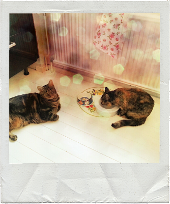 cats in kitchen, light, bokeh, lumié photo app