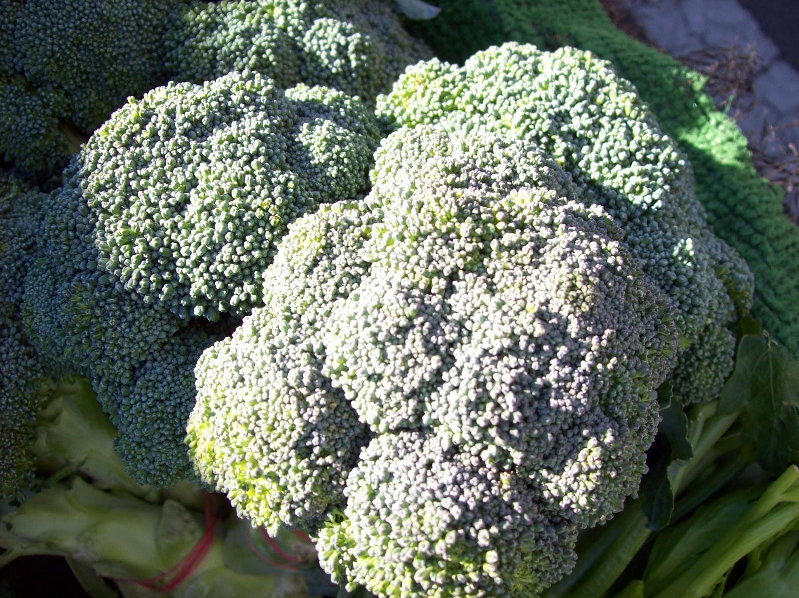 Who Wants Broccoli?