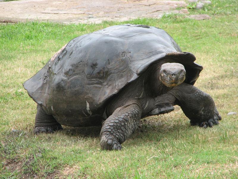 juego de tortuga: