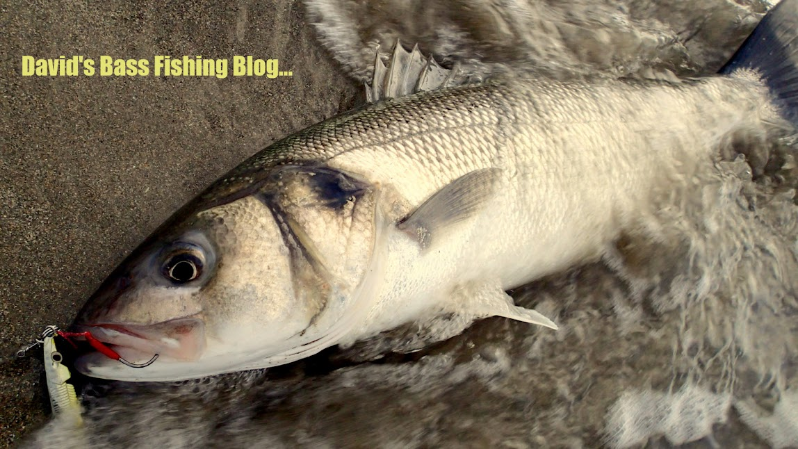 David's Bass Fishing Blog.