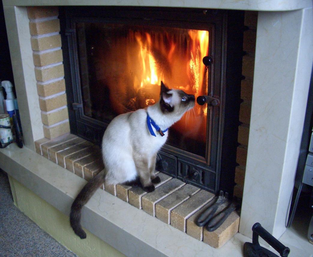 Espacio para amantes de los gatos a los ni os que no piensan - Cristal vitroceramico chimenea ...