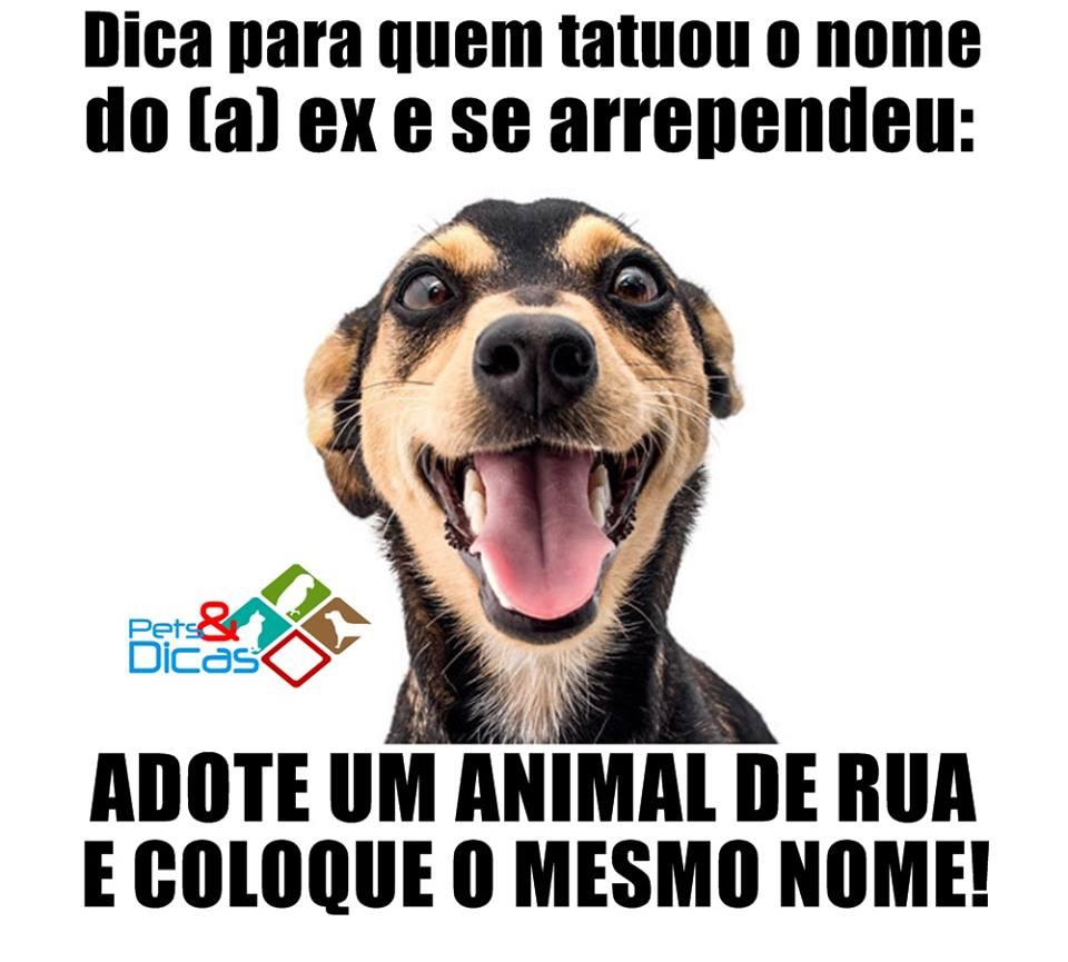 Favoritos Fotos engraçadas de animais com frases para Facebook | Pets e Dicas WL11