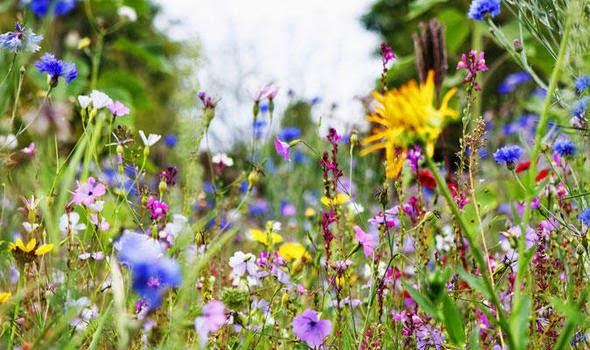 10 loài hoa phụ nữ yêu thích nhất 6