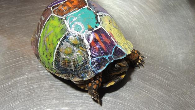 how to clean and preserve a turtle shell