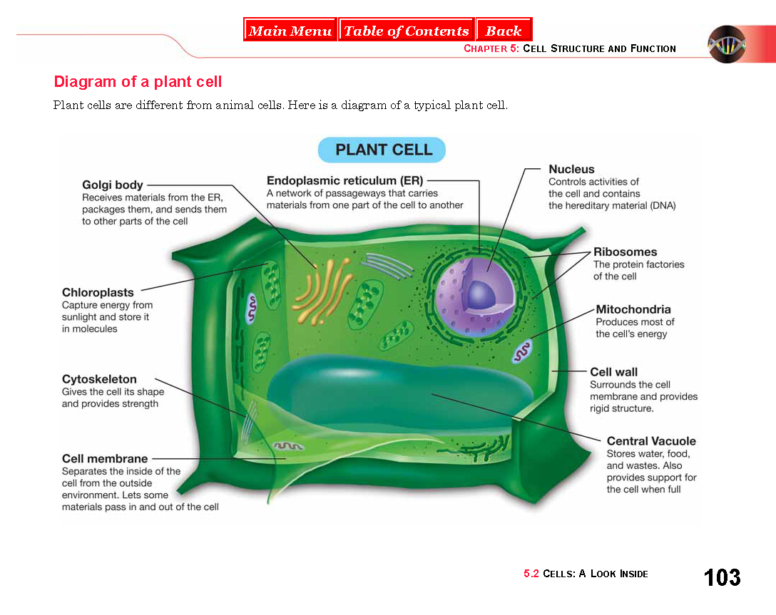 Life science chapter 5 textbook miss durants science class posted 21st january 2015 by busdjackie durant busd ccuart