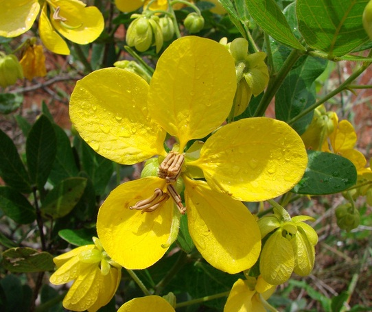 herbal leaves, herbal medicine plants and treatments
