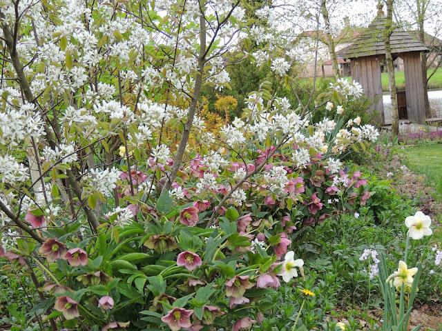 arbuste floraison blanche