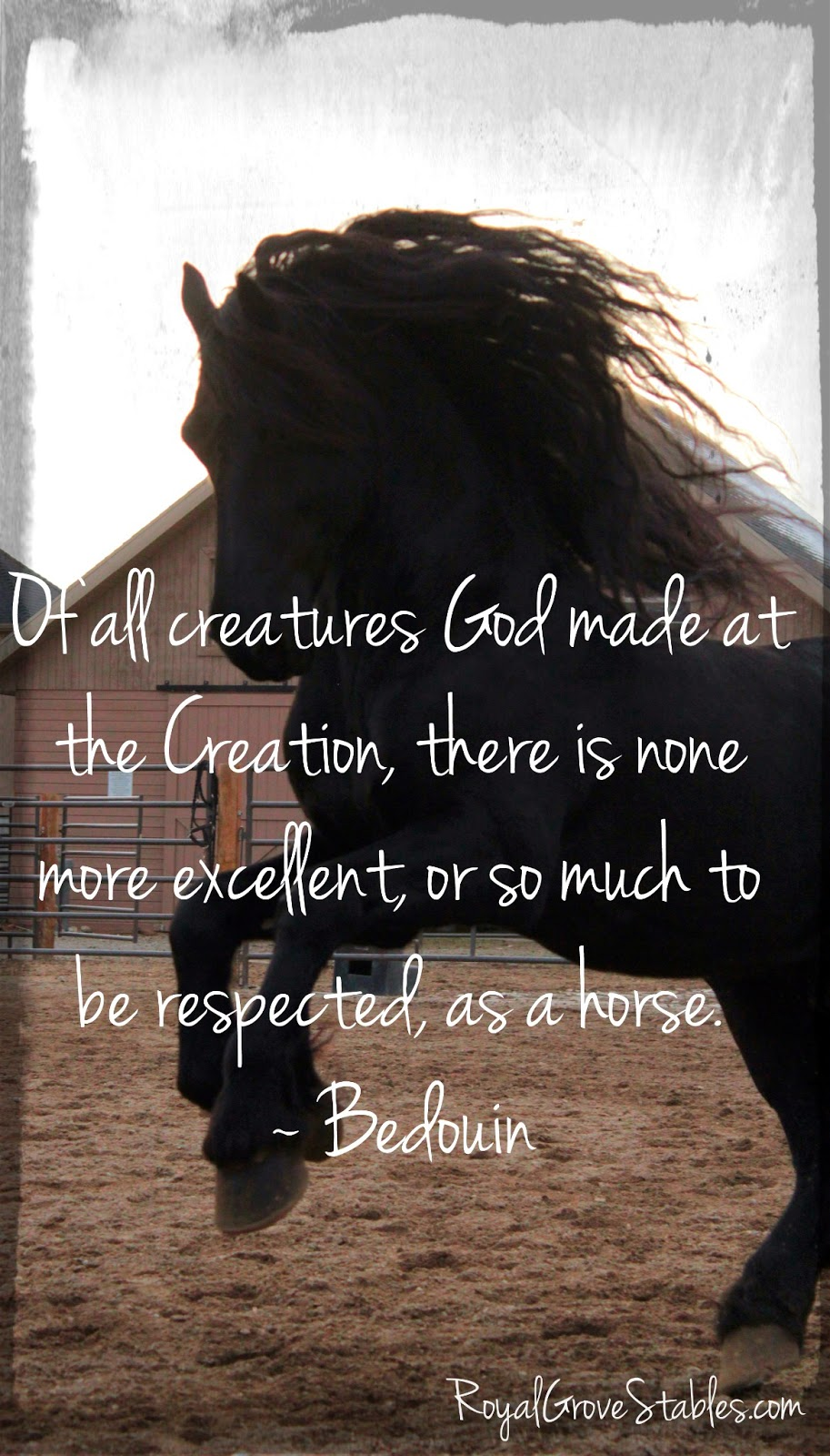 Inspirational Horse Quotes For Girls. QuotesGram