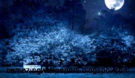 night wallpaper 11