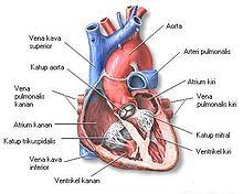 Penyakit Jantung dan Jenis Jenis Penyakit Jantung