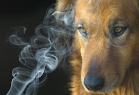 humo tabaco en perros