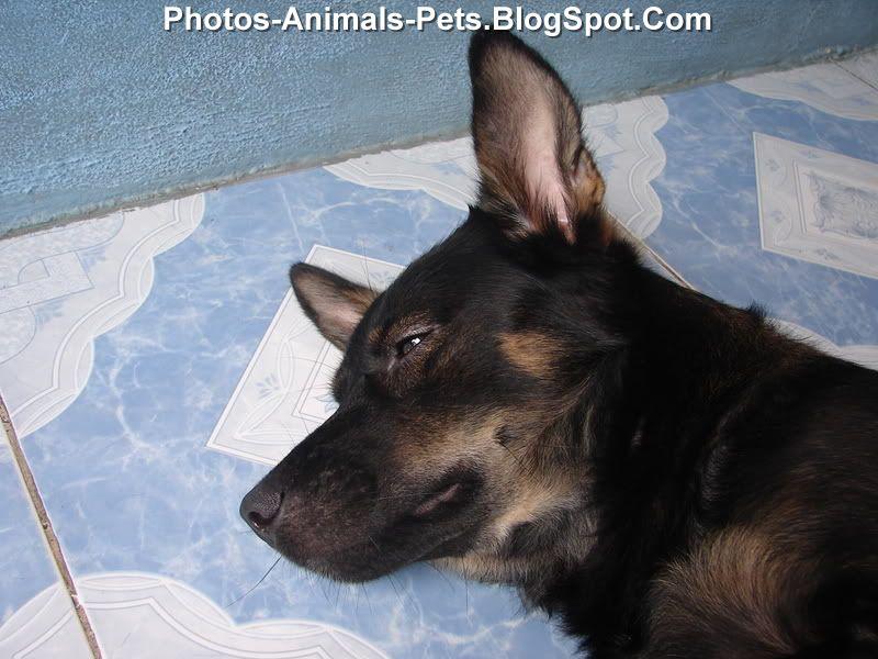 http://3.bp.blogspot.com/-DK3DpNfjOpQ/ThsmS9aCiCI/AAAAAAAABpY/gC1Cazb1vs0/s1600/Dog%2Bsleeping%2Bphoto_0001.jpg