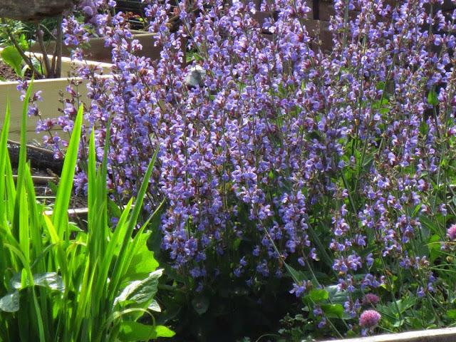 community gardens spring shadows