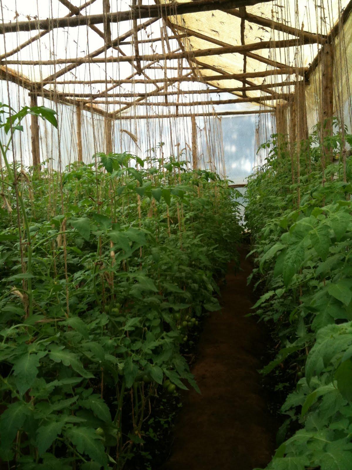open field farming advantages
