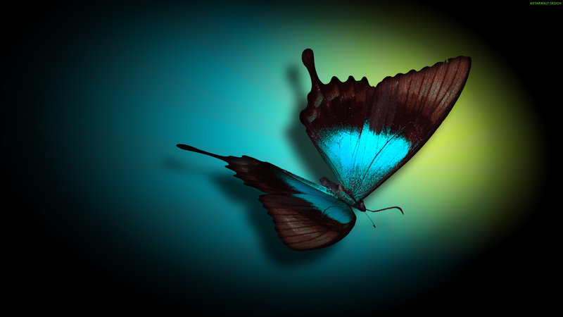 3d Butterfly Wallpaper Funny Animal
