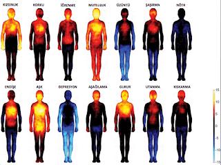 Duyguların vücudumuza etkilerini gösteren resim