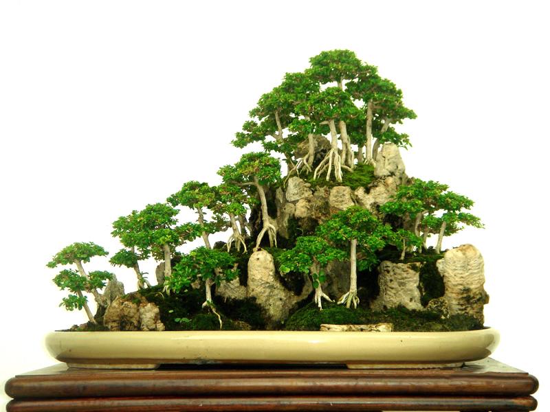 Ciencias sociales ecosistema - Como se cuida un bonsai ...