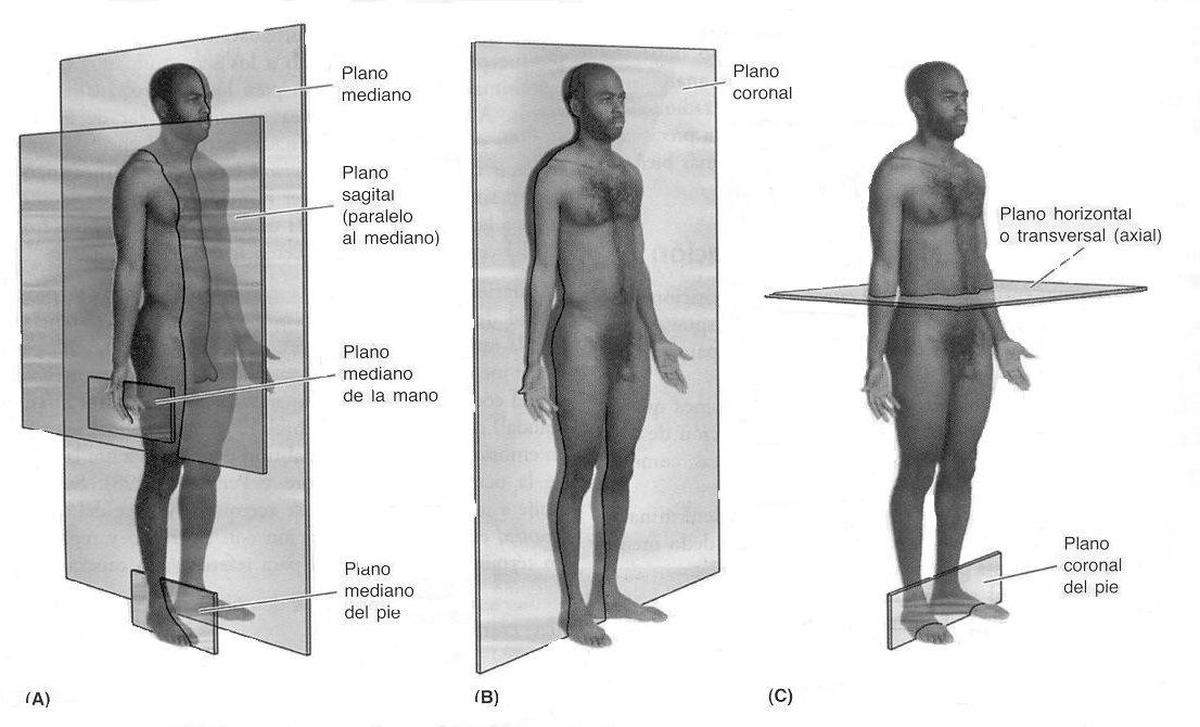 Planimetria. | Celula
