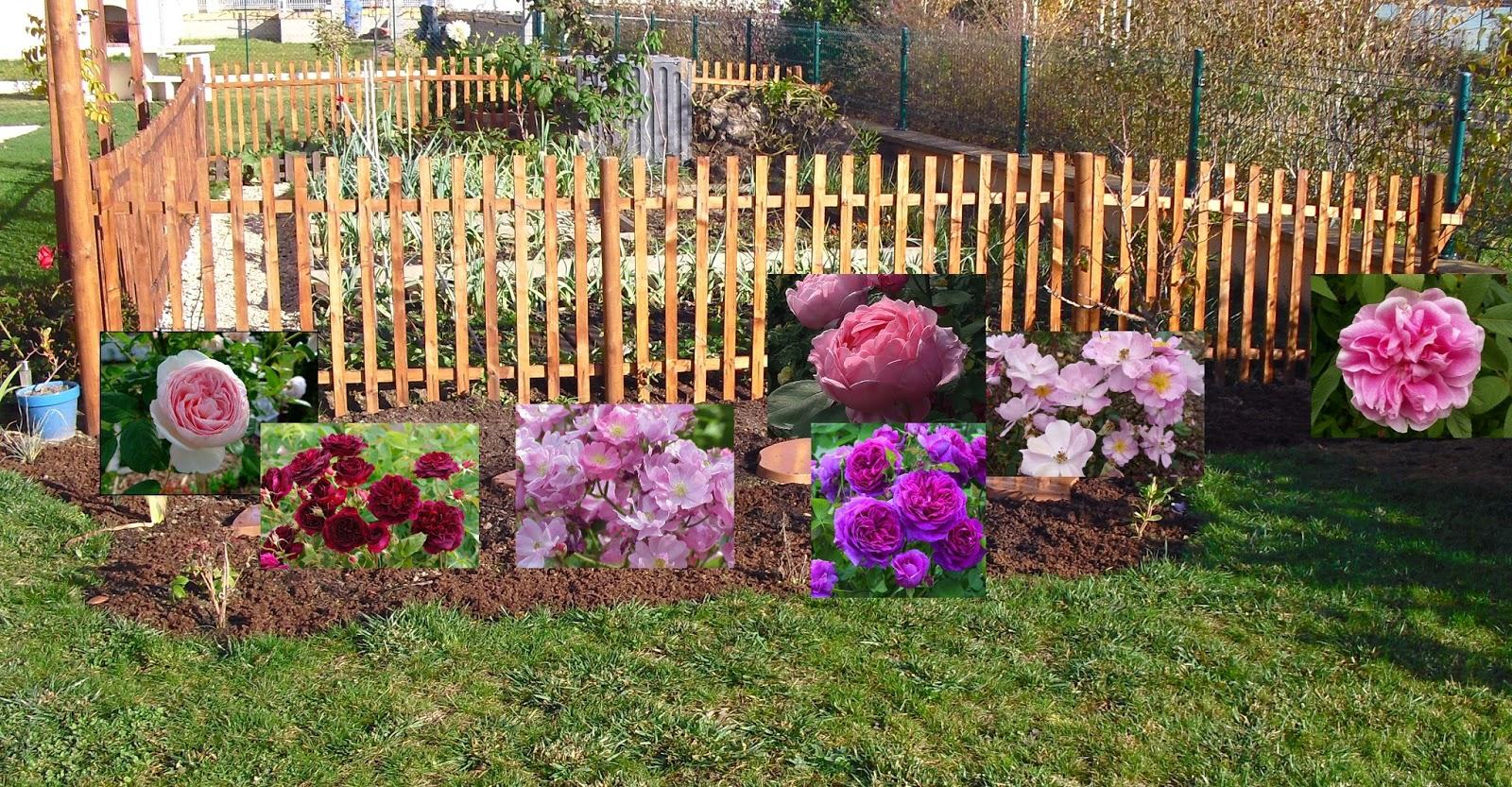Mon petit jardin en Sologne: Les rosiers du massif Invincibelle