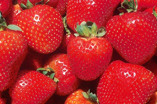 bibit strawberry import asli
